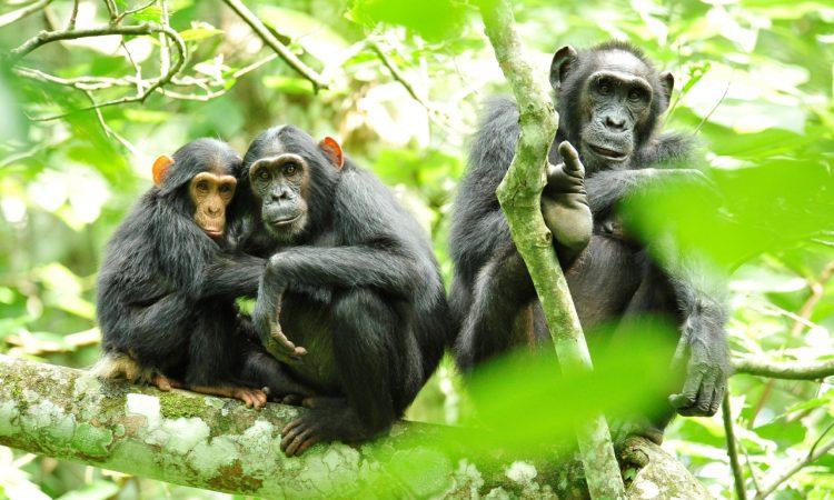 3 Days Kibale Forest National Park Safari