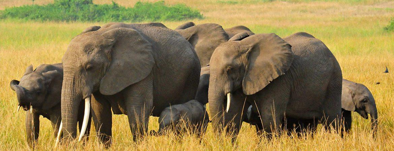 4 Days Honeymoon Safari in Uganda