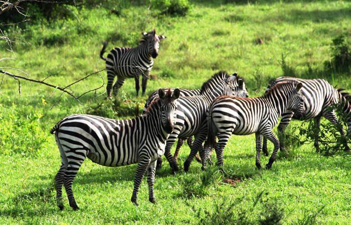 4 Days Lake Mburo Bwindi Jungle Tour