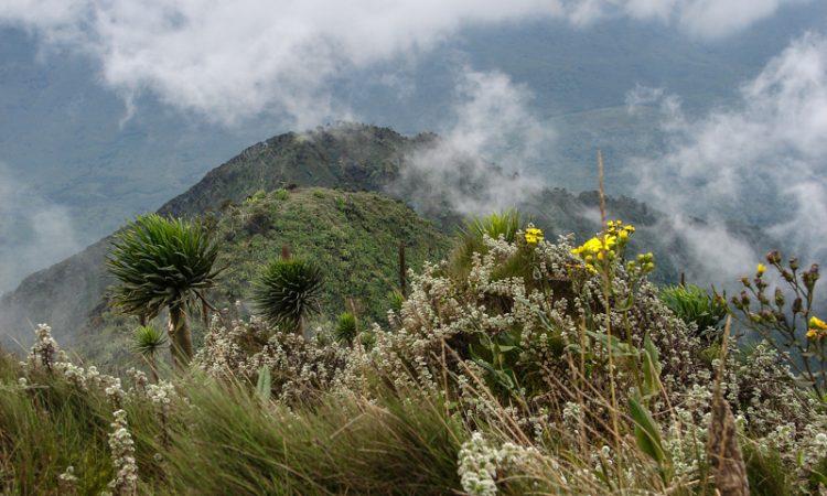 9 Days Rwenzori Mountain Climbing Safari
