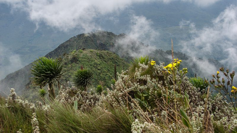 9 Days Rwenzori Mountain Climbing Safari