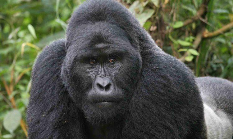 9 Days Uganda Primates Safari