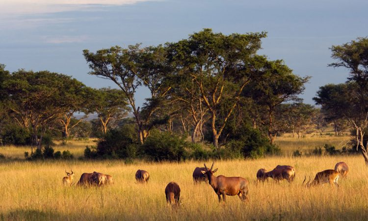 Game drive safari destinations in Uganda