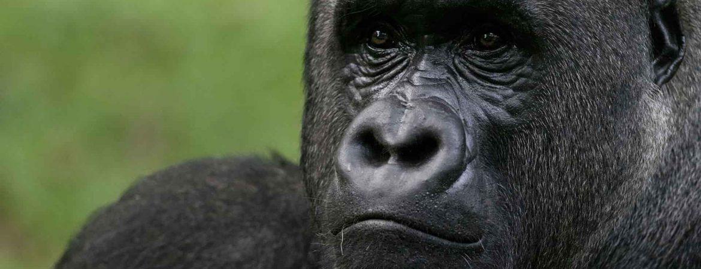 3 Days Kahuzi-Biega Gorilla Trekking Congo