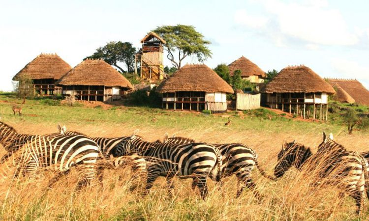 3 Days Kidepo Flying Wildlife Safari