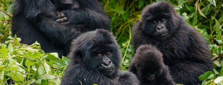 4 Days Bwindi Gorillas & Lake Bunyonyi from Kigali