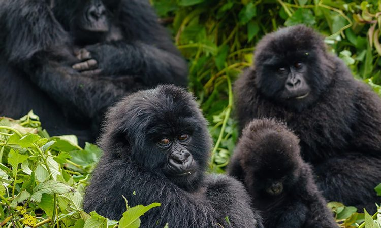 4 Days Bwindi Gorillas & Lake Bunyonyi from Kigali