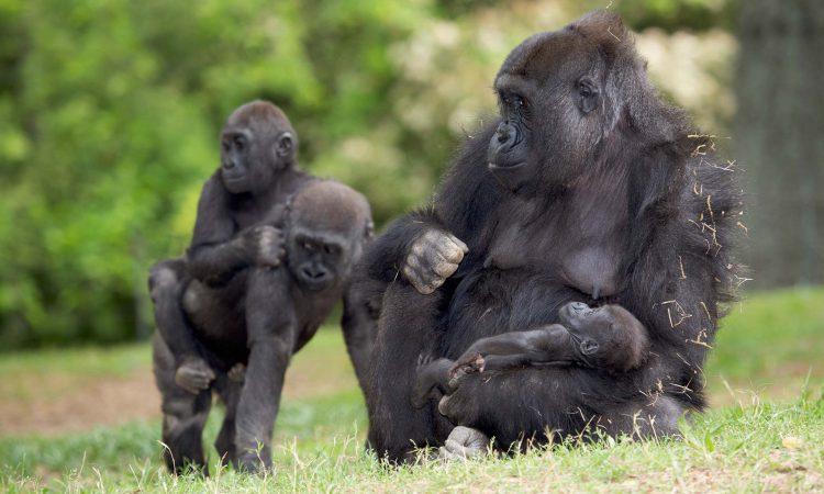5 Days Lowland & Mountain Gorilla Trek