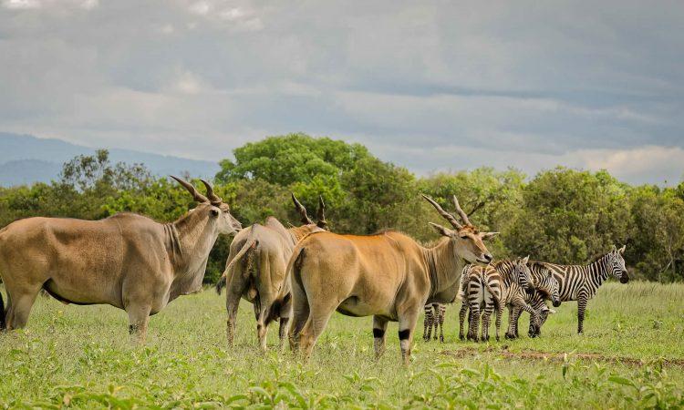 3 Days Aberdare Wildlife Safari in Kenya