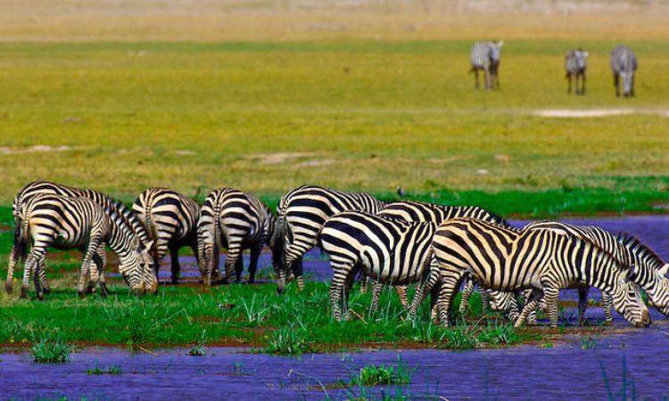 3 Days Amboseli Wildlife Safari Kenya