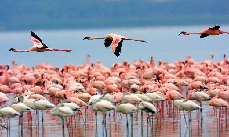 3 Days Lake Nakuru & Lake Naivasha Safari