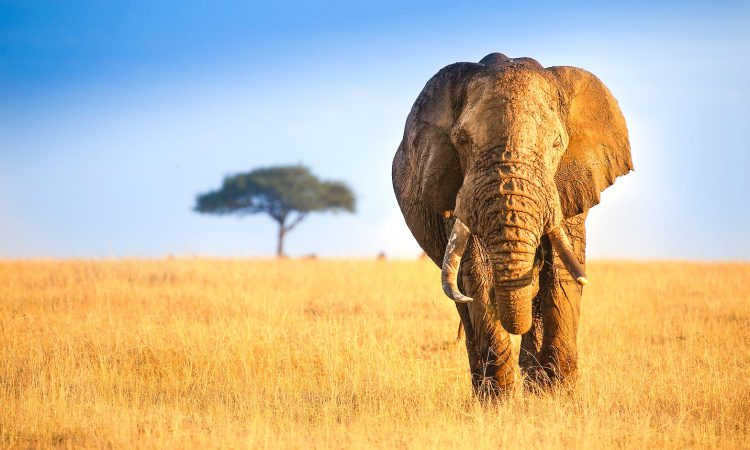 6 Days Kenya Wildlife Safari Holiday